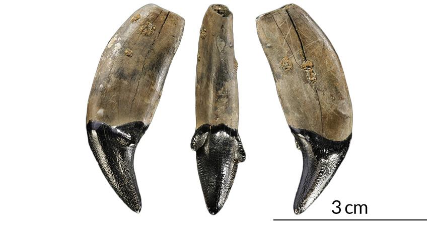 300.000 yıl önce Almanya'daki insanlar, tahta mızrakları avcılık dışında kılıç dişli kaplanları uzaklaştırmak için de kullanmış olabilir.
