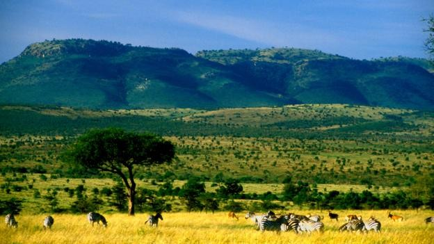 Modern insan Afrika çayırlarında hayatta kalmayı başardı. (Foto: Chris Fredriksson/Alamy)
