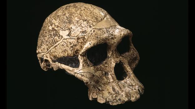 Australopithecus kafatası (Foto: Pascal Goetgheluck/SPL)