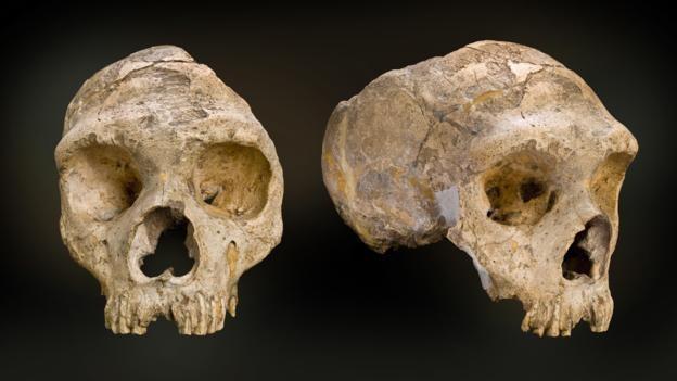 Cebraltar son Neandertallerin birkaçına ev sahipliği yapıyordu. (Foto: Doğal Tarih Müzesi/SPL)