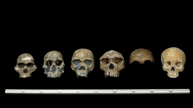 İnsansı türler bizimle ve bizden önce vardı. (Foto: Doğal Tarih Müzesi/SPL)