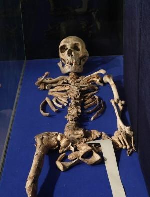 Şanidar Mağarası'nda bulunan bir Neandertal iskeleti, Bağdat'ta Irak Ulusal Müzesi'nde sergileniyor.