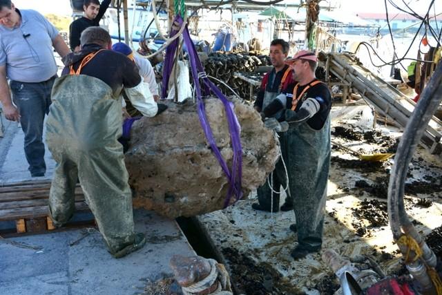 Yunanistan'da Fosilleşmiş Dev Kaplumbağa Fosilleri Bulundu