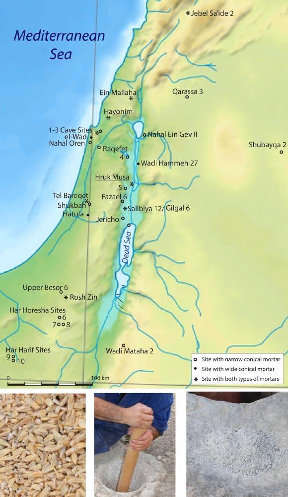 Üst: Güney Levant'ta geniş ve dar konik dibeklerin dağılımını gösteren Natuf yerleşimleri haritası. Alt (soldan sağa): (i) üçüncü kez dar havanda ayıklandıktan sonra neredeyse soyulmuş arpa taneleri; (ii) ayıklanmış tanelerin konik dar havandan uzun bir ahşap havaneli yardımıyla yoğun ve dairesel hareketlerle un haline öğütülmesi; (iii) ilk öğütmeden sonra ince öğütülmüş un ve kabuk ve hububat taneleri. Image credit: Eitam D vd.