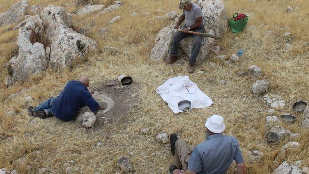 Huzuk Musa'da anakayaya oyulan 12,500 yıllık taş havanların Natufian insanları tarafından nasıl kullanıldığı test ediliyor. Görsel: Sara Katzburg