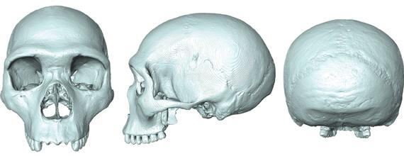 Neandertal ve İnsanın Son Ortak Atası Sanal Olarak Canlandırıldı