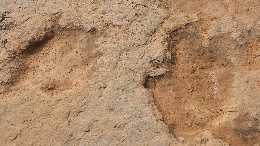 Tunus'ta Dinozorlara Ait 100 Ayak İzi Bulundu