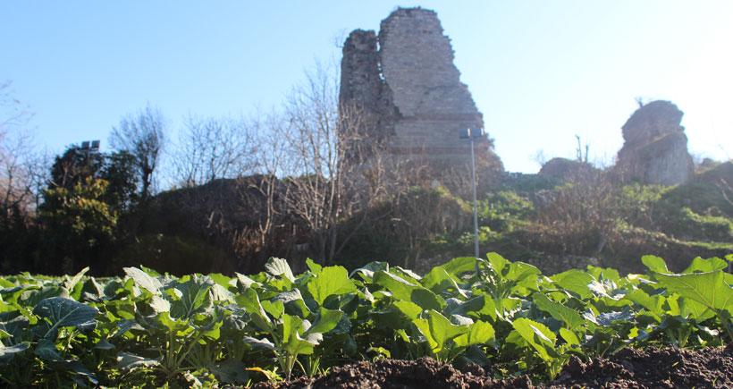 1500 Yıllık Yedikule Bostanları'nda Yıkım Başladı