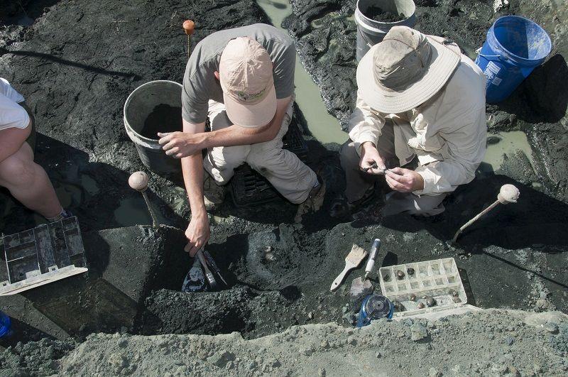 Araştırmacılar kemik yatağının binlerce fosil içeren bir kısmını kazıyorlar. Kaynak: Rowan Üniversitesi