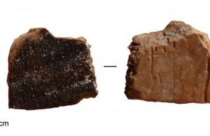 400,000 Yıl Önce İsrail'deki İnsanlar Kaplumbağa Pişirip Yiyordu