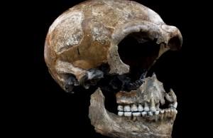 Neandertallerin Diyeti Yüzde 80 Et, Yüzde 20 Bitki Üzerine Kuruluydu