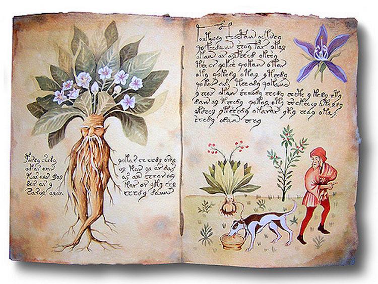 Tatarlı Höyük'te Zehir, Büyü ve Tedavi Amaçlı Kullanılan Adamotu Bulundu