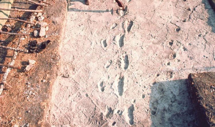 Dünyanın En Eski İnsan Ayak İzleri İnceleniyor