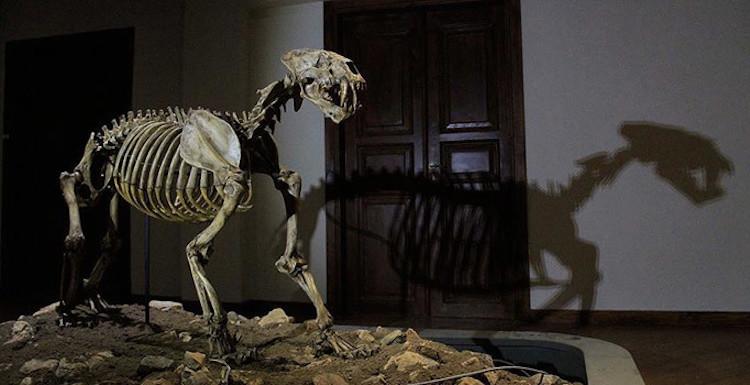 Çankırı'daki Milyonlarca Yıllık Fosiller Yeni Yerine Taşınıyor