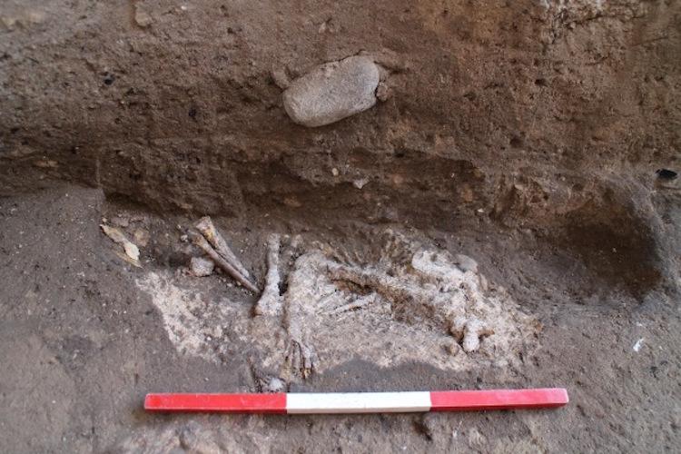 Hasıra sarılı çocuk iskeleti (Foto: Aşıklı Kazı ve Araştırma Projesi Arşivi)