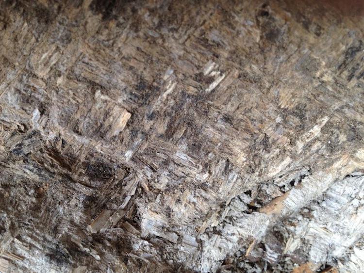Aşıklı Höyük'te 10.000 Yıllık Çocuk Mezarında Çiçekler Bulundu