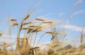 genom analizlerine göre tarım ortadoğuda iki kere keşfedildi