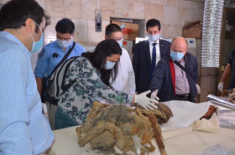 Moğolistan'da Bulunan 1500 Yıllık Türk Mumyası İncelenmeye Başlandı
