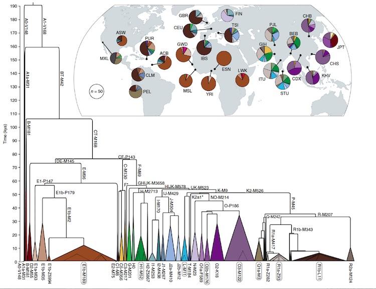 """İnsan erkeği demografisindeki nüfus patlamaları ve coğrafi bölgeleri. Kaynak: Poznik, G. David, et al. """"Punctuated bursts in human male demography inferred from 1,244 worldwide Y-chromosome sequences."""" Nature genetics 48.6 (2016): 593-599."""
