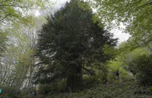 Zonguldak'ta Bronz Çağ'a tarihlenen Porsuk ağacının (Taxus baccata), Anadolu'nun bilinen en yaşlı ağacı olduğu ortaya çıktı. Ağaç aynı zamanda dünyanın en yaşlı beş ağacı arasına girdi.