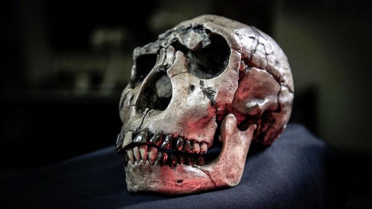 Kenya'dan hominin Homo ergaster kafatası dökümü Fotoğraf: David Hocking