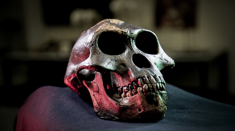 Lucy (fosil), Etiyopya'dan Australopitekusecus afarensis fosili Fotoğraf: David Hocking
