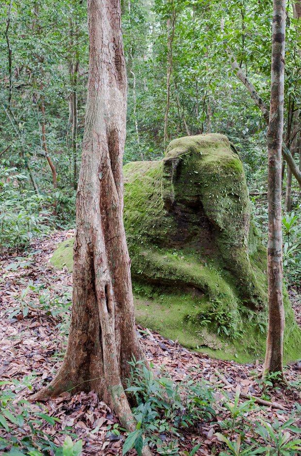 Kamboçya Ormanlarının Altında Devasa Şehirler Keşfedildi