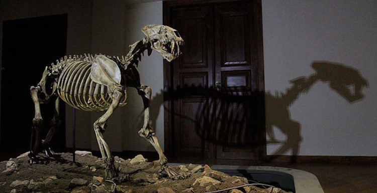 8 Milyon Yıl Önce Çankırı'da Çok Çeşitli Hayvanlar Yaşıyordu