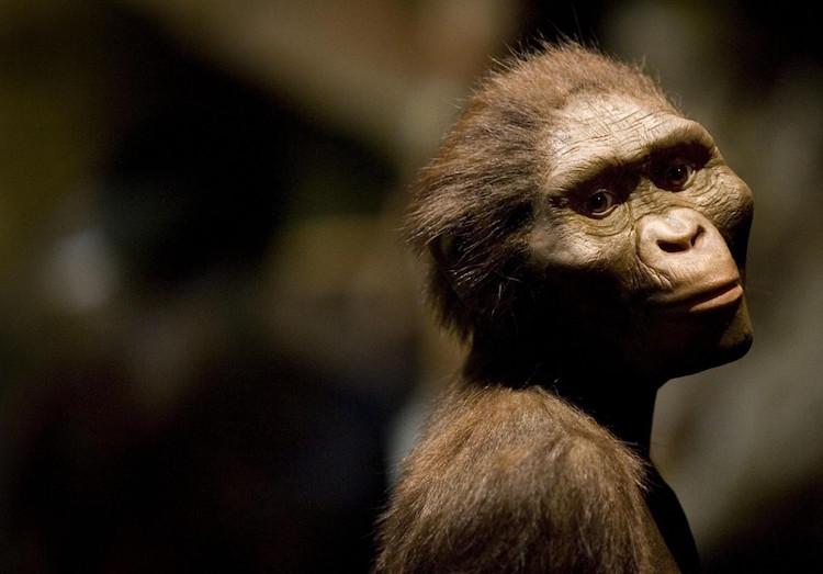 3.2 Milyon Yaşındaki İnsansı Akrabamız Lucy Ağaçtan Düşerek Ölmüş