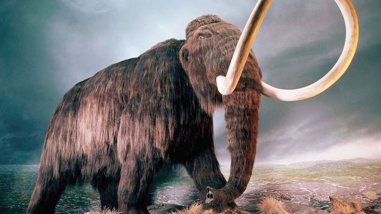 Yünlü Mamutların Soyu Susuzluk Yüzünden Tükenmiş