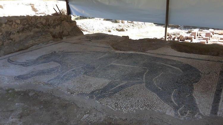 Gergedan mozaiği / Paola Giglio