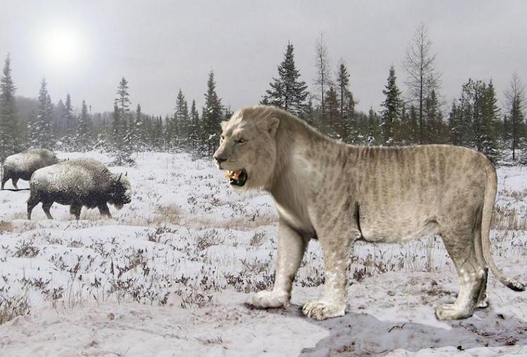 Mağara Aslanlarının Yok Olmasına İnsanlar Neden Olmuş Olabilir