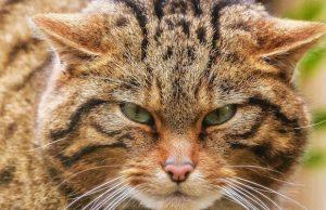 Evcil kediler dünyaya nasıl hakim oldu?
