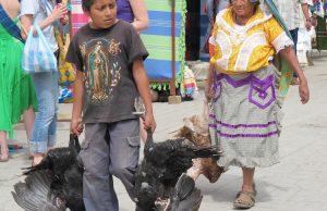 Bilinen En Eski Evcil Hindi Yumurtaları Meksika'da Bulundu