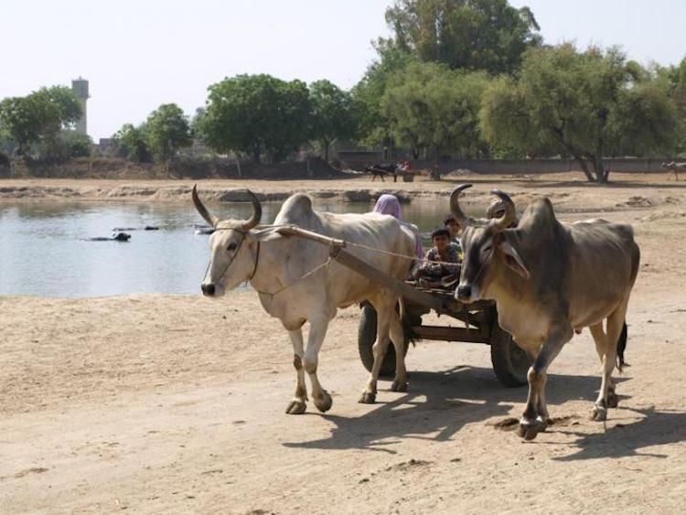 Rakhigari sit alanı F: Toprak, Su ve Yerleşim Projesi