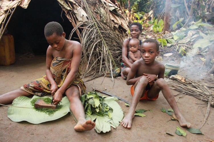 Yabani koko bitkisini et ile pişirmek için kesen avcı-toplayıcı bir BaYaka kadını. F: Gül Deniz Salalı