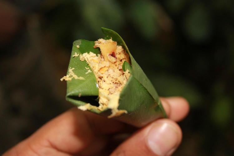 Havanda dövülüp ilaç olarak kullanılan Entandrophragma Cylindricum. BaYaka Pigmeleri göz ya da buruna damlatılacak ilaçları yapraklara sararak kullanıyorlar. F: Gül Deniz Salalı