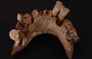 1.2 milyon yıllık en eski kürdan kullanımı bulundu.