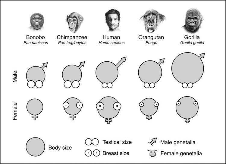 spermi artiran yiyecekler