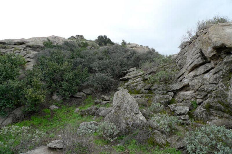 Jurupa Meşesi - California, ABD