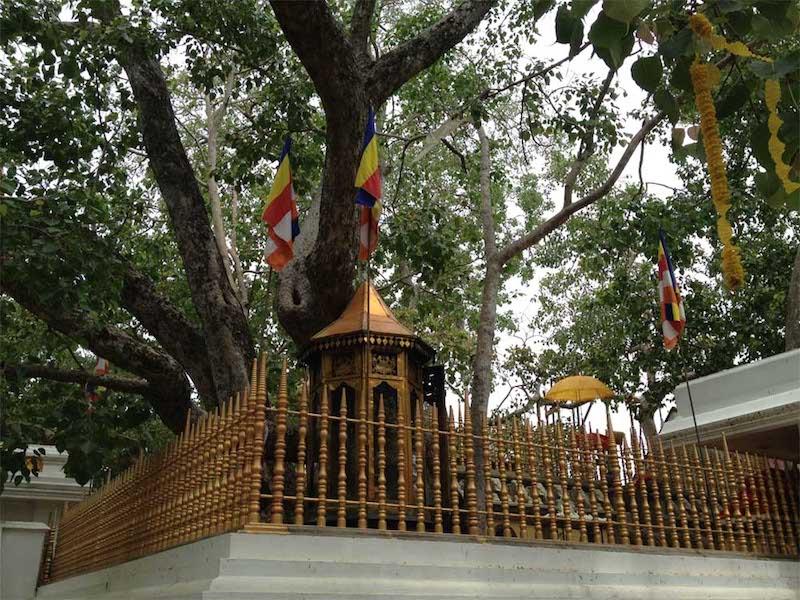 Jaya Sri Maha Bodhi (Kutsal Hintinciri) - Sri Lanka