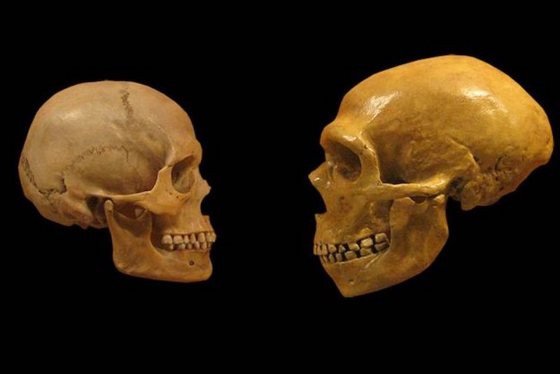 Neanderthals disappearing Cold and dry climate was involved - image ikli2 on https://sattvnews24.com