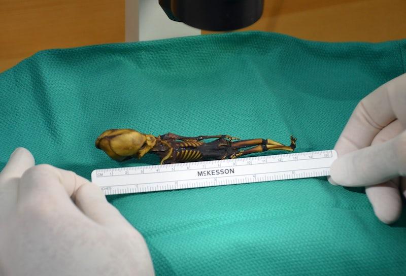 Alien Mummy - image uzay on https://archaeologys.com