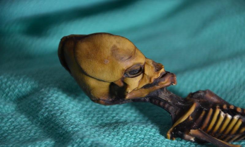 Alien Mummy - image uzay2 on https://archaeologys.com